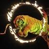 Цирки в Ахтырском