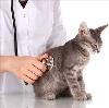 Ветеринарные клиники в Ахтырском